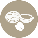 walnuts-icon.png